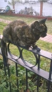 Same or different music for the other side: cat sitting on a fence